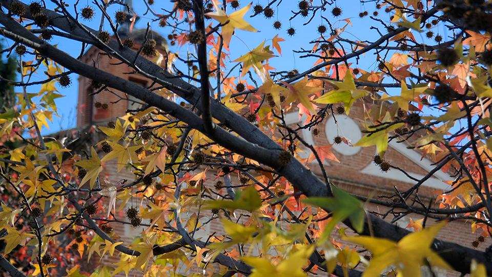 Todavia otoño en la ciudad cervantina