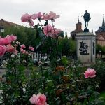 Las rosas de Cervantes