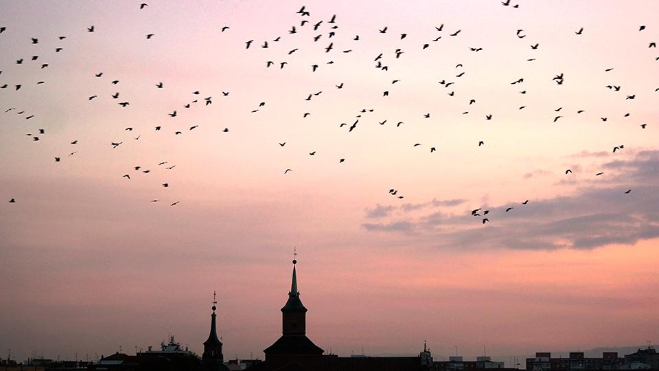 Ciudad de pájaros