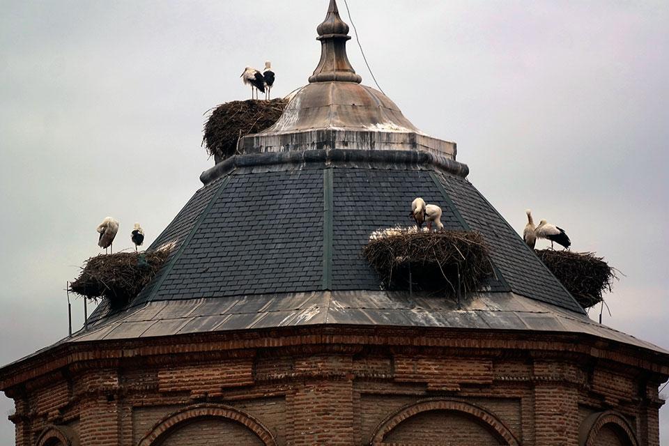 Cigüeñas de Alcalá