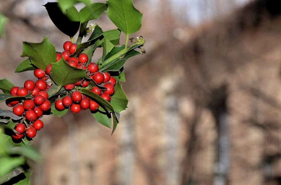 Fruto de invierno en Alcalá