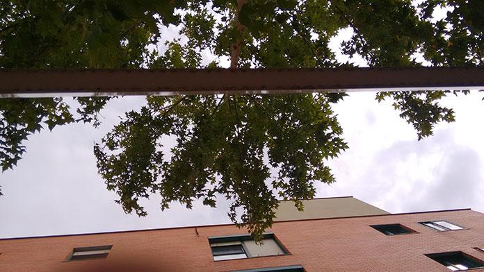Las ramas invasoras de un platanero en Espartales Sur