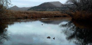 Patos en el rio Henares