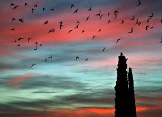 Amanecer de los pájaros