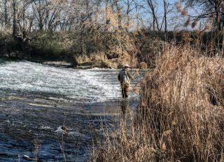 Domingo de pesca en el rio Henares