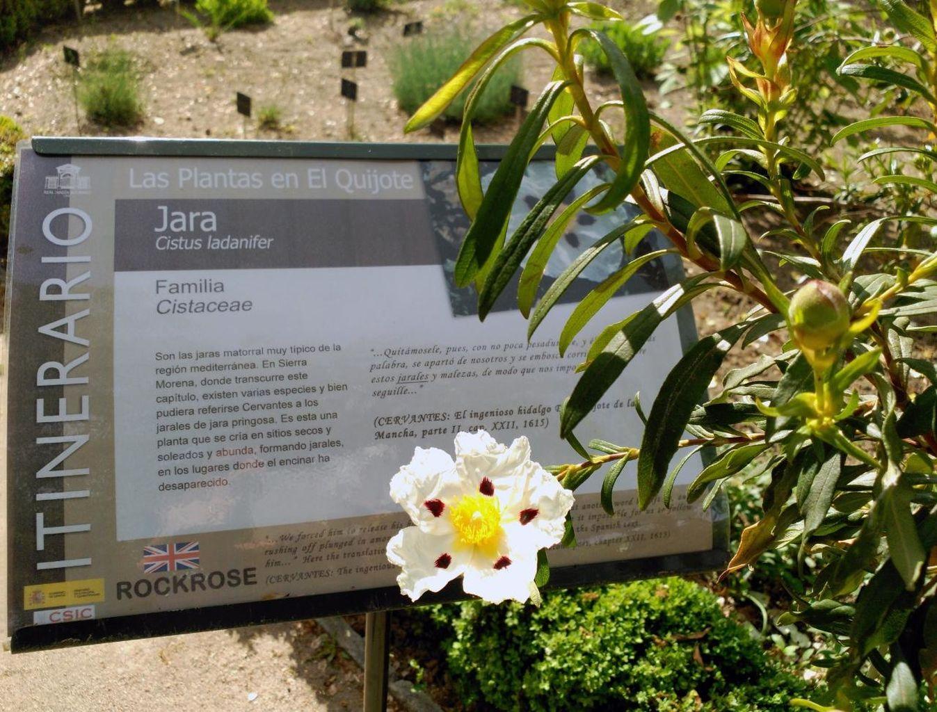 Plantas del Quijote en el Jardín Botánico de Alcalá de Henares