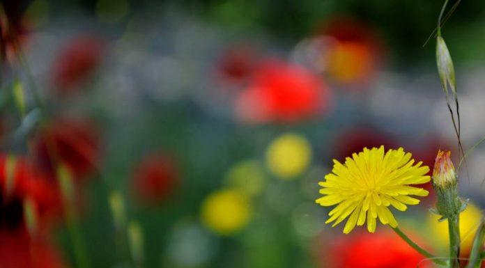 Flor de primavera en Alcalá