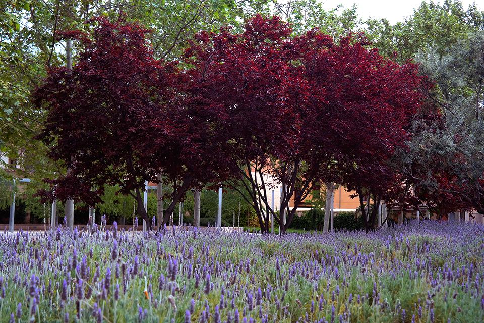 Primavera en el Jardín de las Palabras