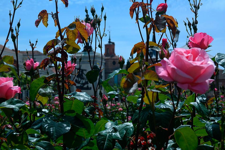 Esplendor primaveral en la Plaza de Cervantes