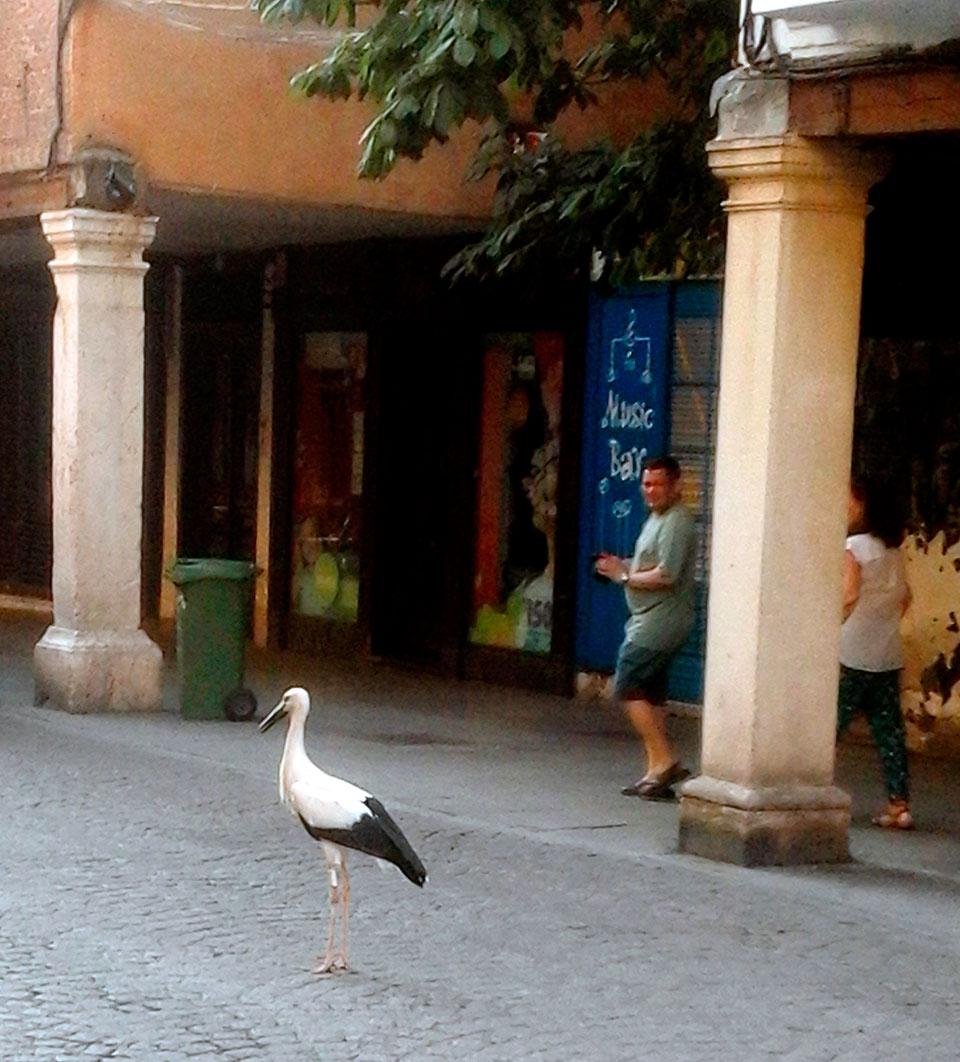 Un paseito por la Calle Mayor