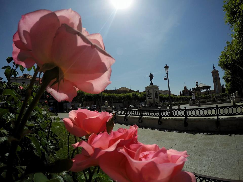 Rosas al sol de julio en la plaza sin gente