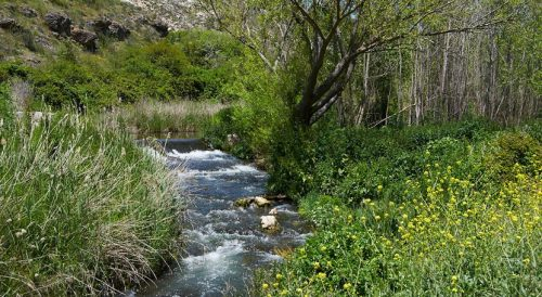 Curso alto del rio Henares