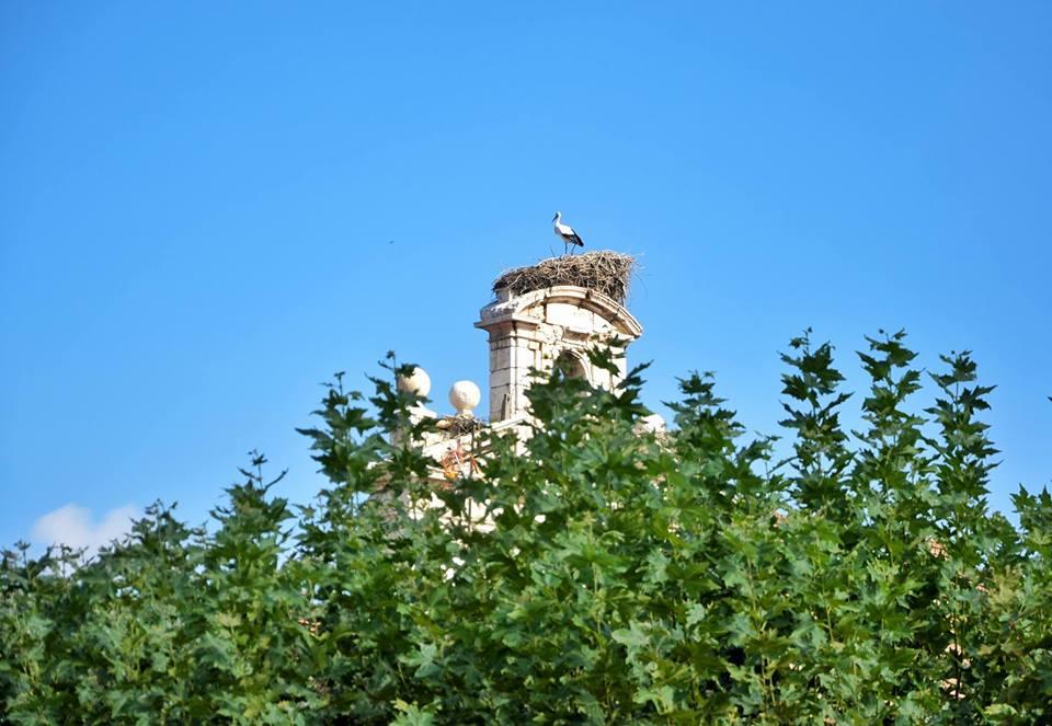 La primera cigüeña del otoño en Alcalá de Henares