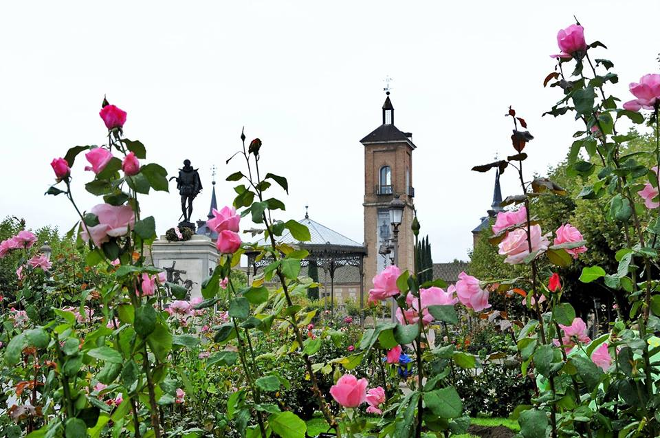 Rosas cervantinas un dia de lluvia