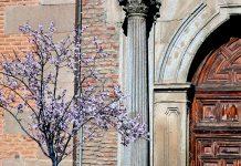 Primera floración de prunus en la calle Libreros