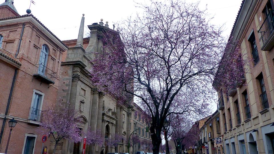 Prunus de Libreros floridos