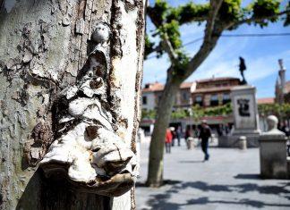 La bailarina del árbol [ Día de la Danza ] Plaza de Cervantes