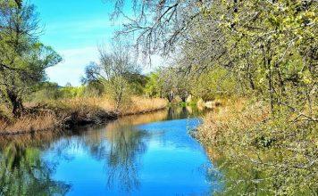 Primavera en el rio Henares