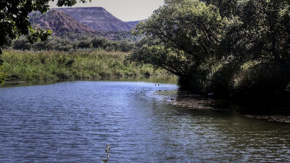 Meandros del Henares