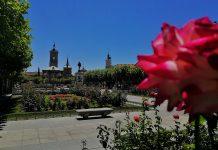 Rosa de ferragosto en la plaza cervantina