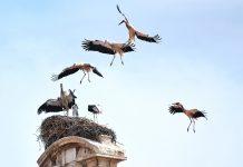 Overbooking de cigüeñas en Alcalá