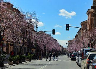 Esplendor primaveral en la calle Libreros