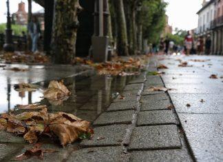 Veroño en Alcalá de Henares