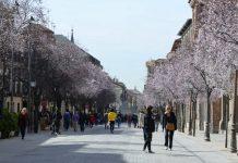 Los prunus ya florecen en la Calle Libreros