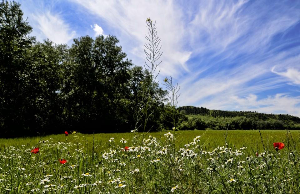 Esplendor primaveral en tiempos de confinamiento